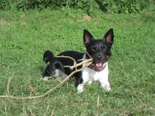 Jacky mit 1 Jahr und 11 Monaten
