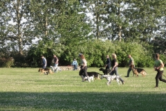 Hundefreunde Tützpatz - 24.06.2009