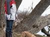 Schnüffelpause von Beagle- Mix Hündin Runa am Tollensesee