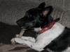 Jacky mit 1 Jahr und 2 Monaten