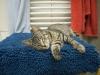 Miss Marple - 5 Monate alt