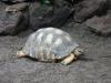im Zoo Leipzig - Schildkröte