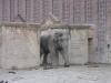 im Zoo Leipzig - Elefant