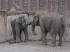 im Zoo Leipzig - Elefanten