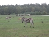 Afrikanische Steppe mit Wildtieren im Serengetipark Hodenhagen