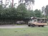 Safaribus und Nashörner im Serengetipark Hodenhagen