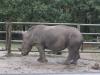 Nashorn im Serengetipark Hodenhagen
