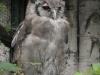 Milchuhu im Weltvogelpark Walsrode