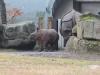 Zoo München