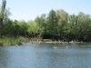 Blick auf die Lachmöwenkolonie auf dem Herrensee