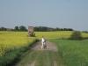 mein Freund auf Landweg zwischen Hasseldorf und Krusemarkshagen