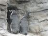 Ozeaneum Stralsund - Pinguinanlage