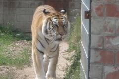 Tigerpark Dassow - 21.05.2011