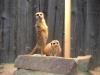 Zoo Chemnitz