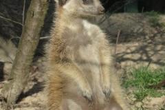 Zoo Rostock 13.04.2009