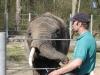 Afrikanischer Elefant bei der Fütterung